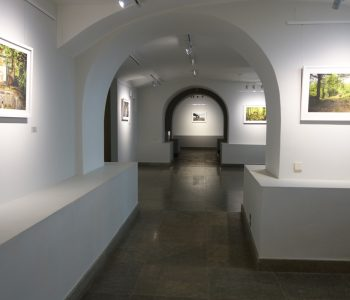 Exhibition «In the gap between the trees»