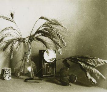 Цикл лекций «Петербургская фотография конца ХХ – начала ХХI века в лицах»